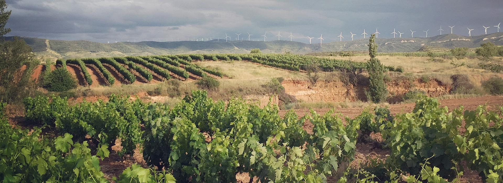 Panorámica con los viñedos como protagonistas